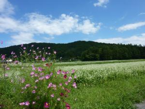 コスモスとそばの花