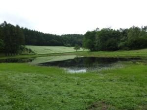 まぼろしの池(昨年)