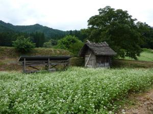 タケオくんの畑