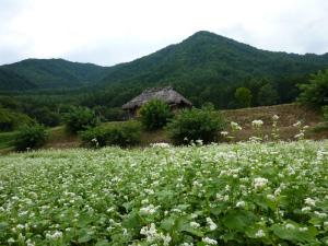 ユキちゃんの畑